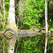 Alligator Canal  DSCN3333