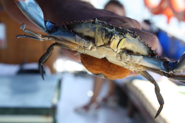 Crab When Pregnant 47