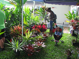 Selection of bromeliads and Cordlines