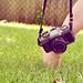 235/365 - i <3 photography 7/10 (Explored) by Www.CourtneyCarmody.com/