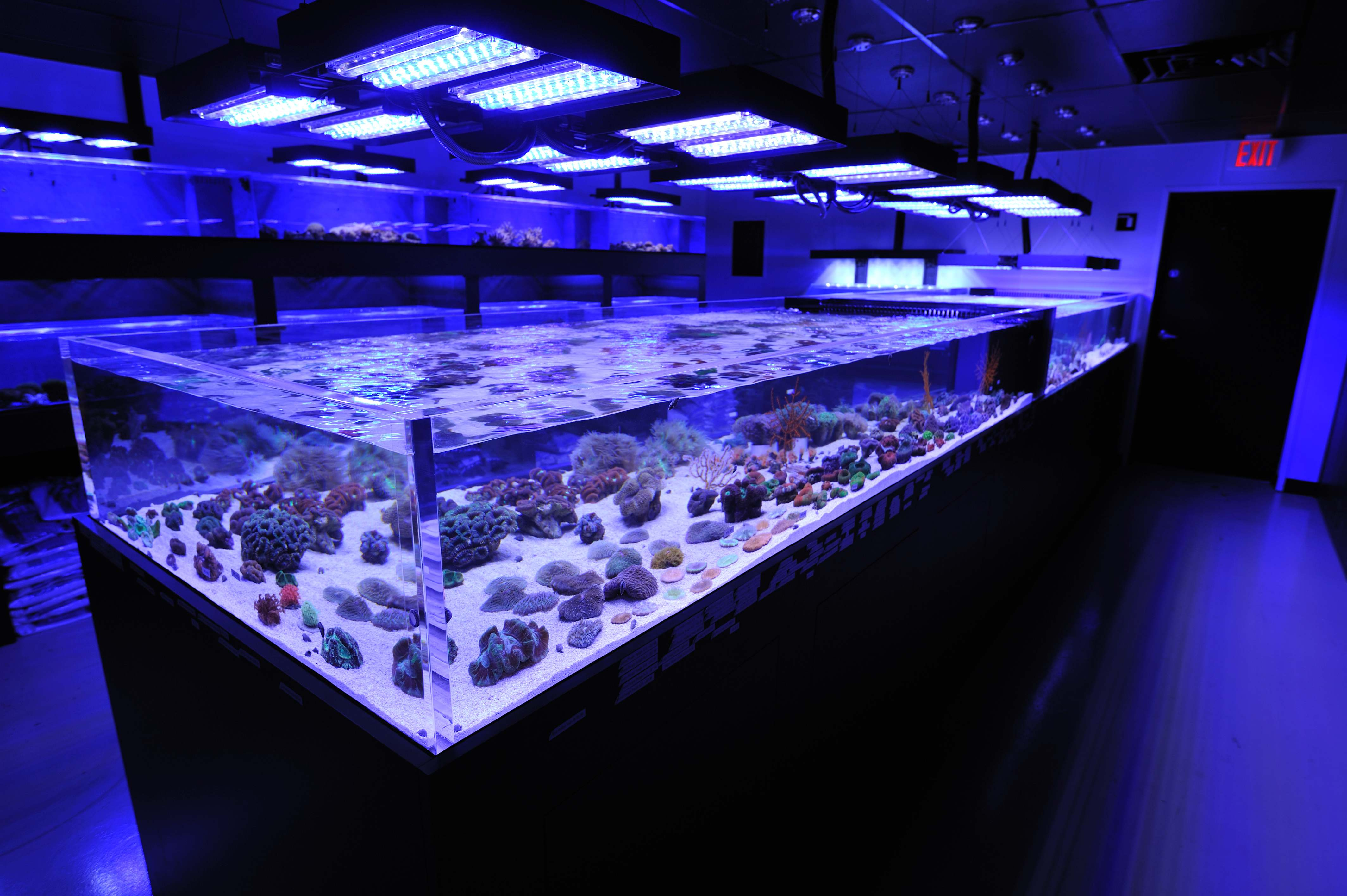 Coral Frag Tanks At Reef Culture Lit By Panorama Led