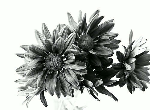Flowers in B&W - Testing the Mamiya 645 Pro