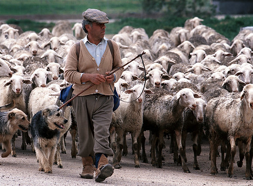Spanish Shepherd and His Flock