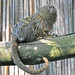 Pygmy Marmoset by Truus & Zoo