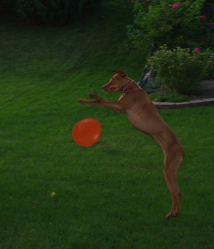 MILLA PLAYS CATCH
