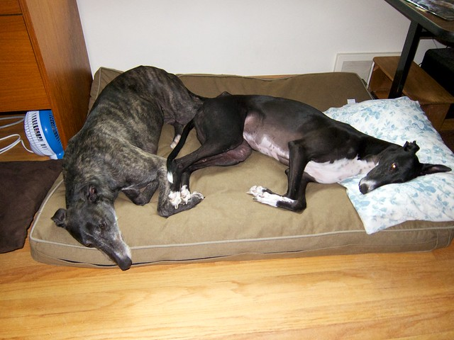 Cute Dog Beds For Small Girl Dogs