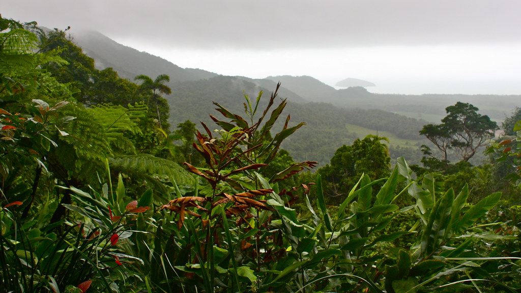 The Daintree Rainforest - 05