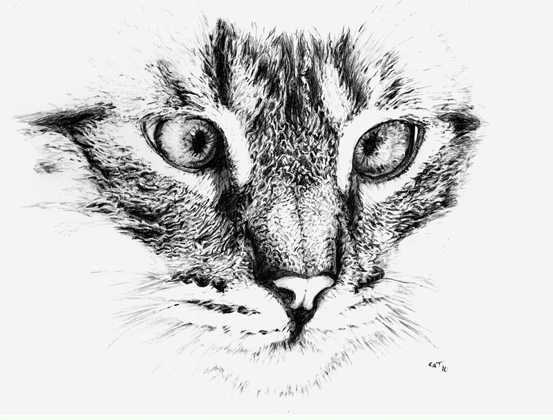 Cat - pen drawing 2010 - a photo on Flickriver
