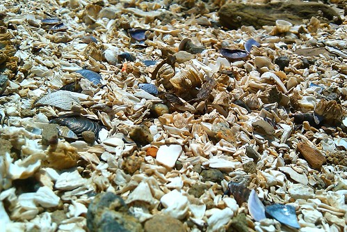 Beach sand made of shells