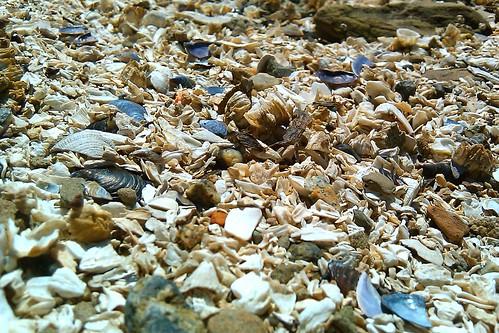 Beach sand made of shells