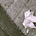 Small photo of Dead leaf and the dirty ground