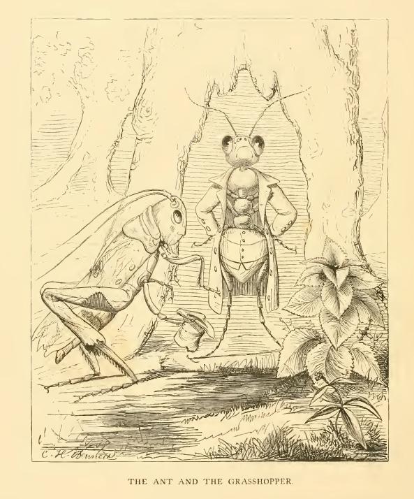 Formica et Cicada