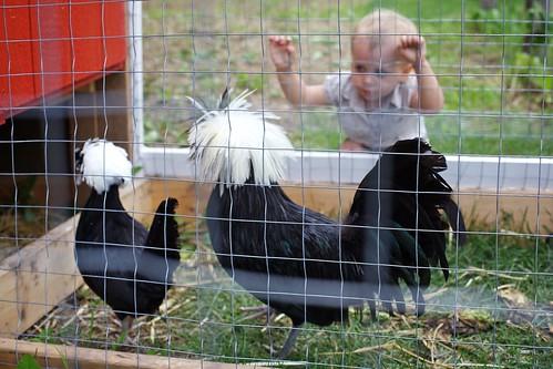 toddler farm ef50mmf14usm bowdensunmaze