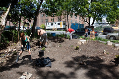 GSCA Vacant Lot Project (CR Permaculture Guild) - Albany, NY - 10, Jul - 07 by sebastien.barre