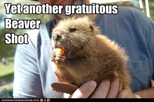 funny-pictures-beaver-is-gratuitous
