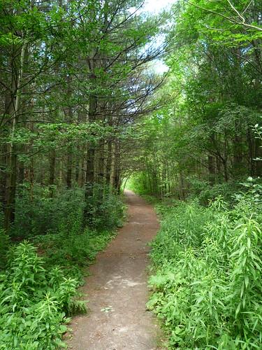 Woodland trail by Margaret Bourne