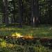 Taiga behind, woods beyond