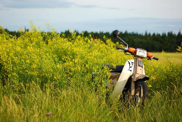 C90 in a field