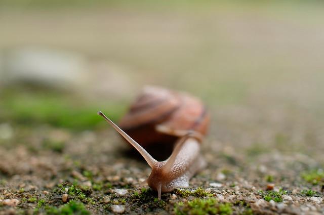 20100627 Jozan-en 5 (Snail)