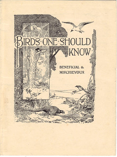 Birds one should know - Beneficial & Mischievous