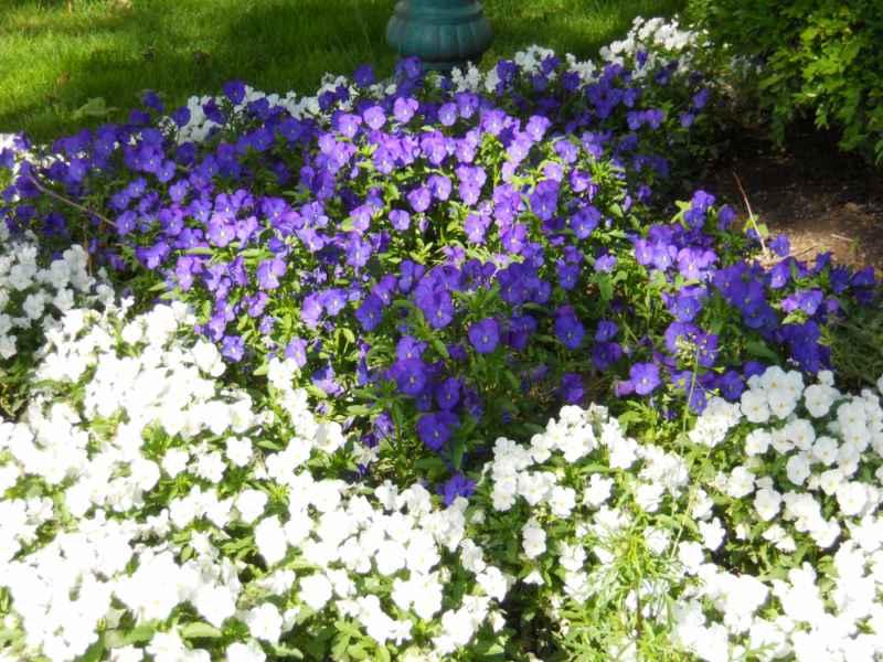 Composiciones vegetales para otoño e invierno