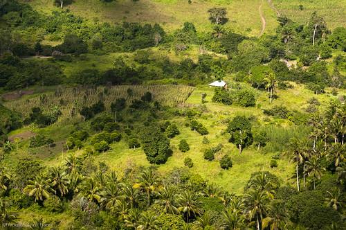 coast kenya biome shimbahills northernzanzibarinhambanecoastalforestmosaic tropicalandsubtropicalmoistbroadleafforests