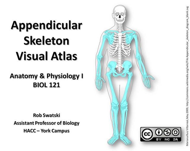 Bones for anatomy study games