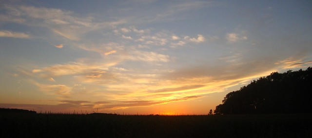 Sunset over a Cornfield (White County, Indiana)