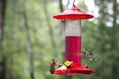 cardinal(0.0), hummingbird(1.0), flower(1.0), red(1.0), bird feeder(1.0), bird(1.0),