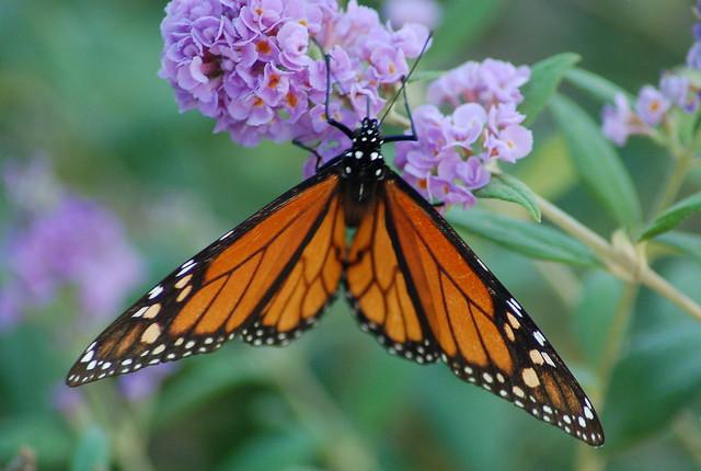 Butterfly Farm Lincoln Rhode Island