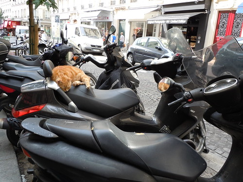 sleeping cat in paris