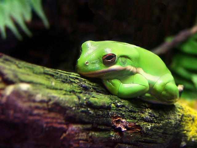 Tenessee Aquarium Frog Flickr - Photo Sharing!