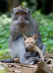 A-long-tailed-macaque-mon-006