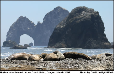 Harbor Seals And Crook Point Oregon Islands Nwr Flickr