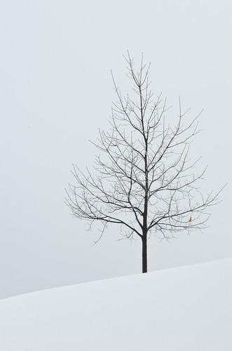 park snow tree newjersey unitedstates union nj icestorm volunteerpark unioncounty treeonahill nikon70300mmvr thattreeinvolunteerpark