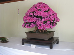 shrub(0.0), lavender(0.0), flower arranging(1.0), flowerpot(1.0), flower(1.0), purple(1.0), floral design(1.0), lilac(1.0), houseplant(1.0), floristry(1.0), pink(1.0), bonsai(1.0),