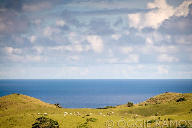 Batanes Itbayat Fluffy Clouds Blue Sea Green Hills Grazing Cows