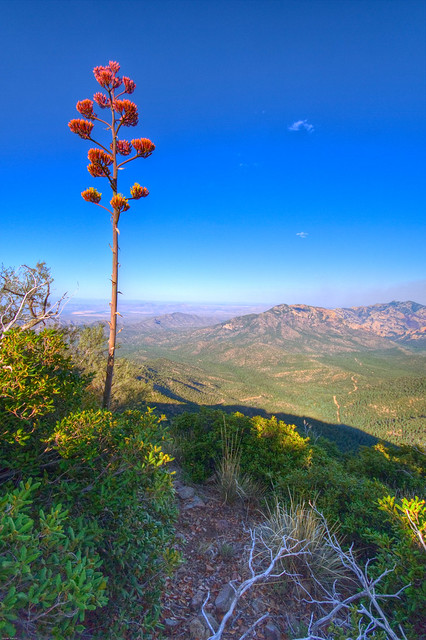 Blooming Agave Overlook