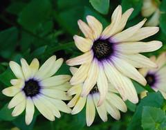 Summer flowers July 2010