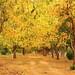 nature by naveen choudhary