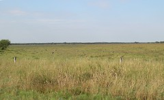 wetland(0.0), grazing(0.0), fauna(0.0), plateau(0.0), salt marsh(0.0), marsh(0.0), prairie(1.0), land lot(1.0), steppe(1.0), ecoregion(1.0), field(1.0), grass(1.0), plain(1.0), natural environment(1.0), meadow(1.0), pasture(1.0), rural area(1.0), savanna(1.0), grassland(1.0), safari(1.0), wildlife(1.0),