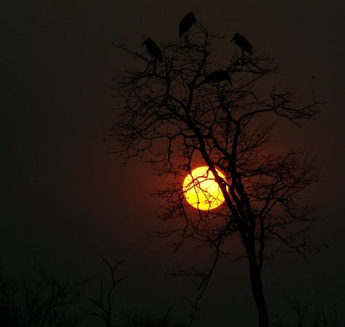 africa sunset zimbabwe