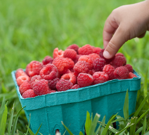 Spencer Farm raspberries