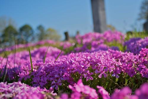flower cemetery 28mm nikkor nikkor28mm28