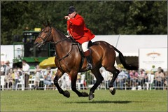 english riding(0.0), western riding(0.0), dressage(0.0), western pleasure(0.0), polo(0.0), animal training(0.0), jumping(0.0), endurance riding(0.0), physical exercise(0.0), animal sports(1.0), equestrianism(1.0), modern pentathlon(1.0), eventing(1.0), mare(1.0), stallion(1.0), equestrian sport(1.0), sports(1.0), recreation(1.0), outdoor recreation(1.0), equitation(1.0), horse(1.0), jockey(1.0),