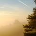 sunrise fog morning pine by lukeallen