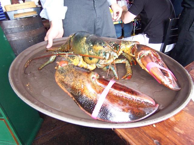 10 pound lobster