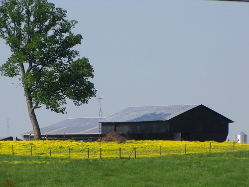 Farmscape In Kentucky.
