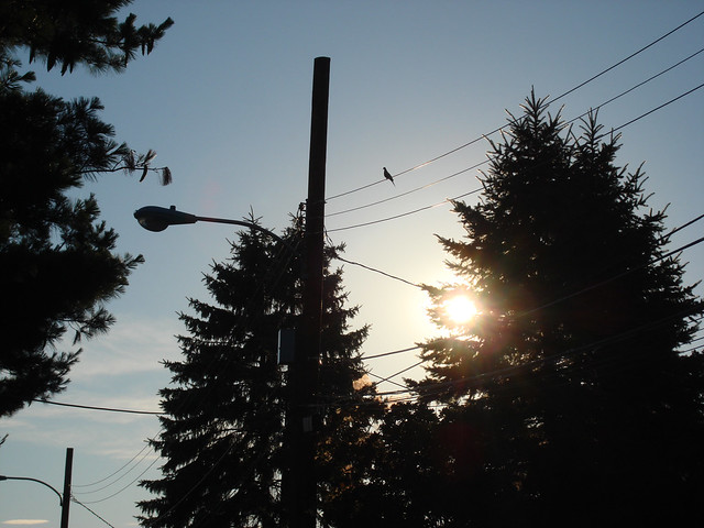 Bird on telephone wire; Wakefield, MA (2010)