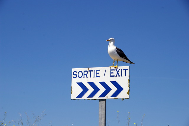 French bird, refuses to face the correct way!